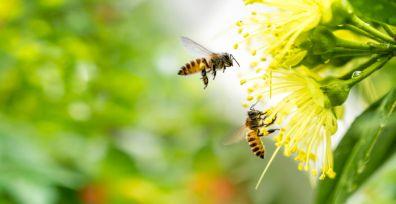 Tudo sobre as abelhas